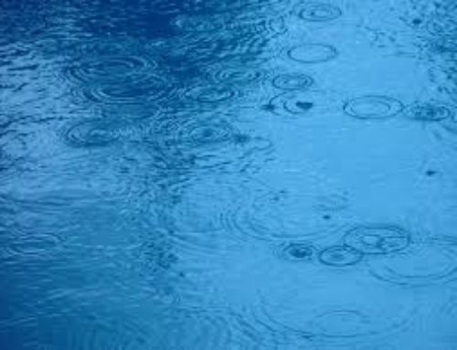 Let it RAIN! -Jim Manske  CNVC Certified Trainer